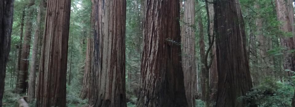 Redwoods 960x350