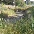 Stevens Creek 3