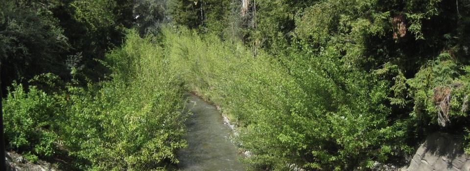 adobe creek5 960x350