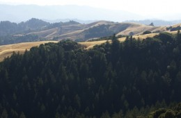 Skyline Ridge Tree Farm Restoration