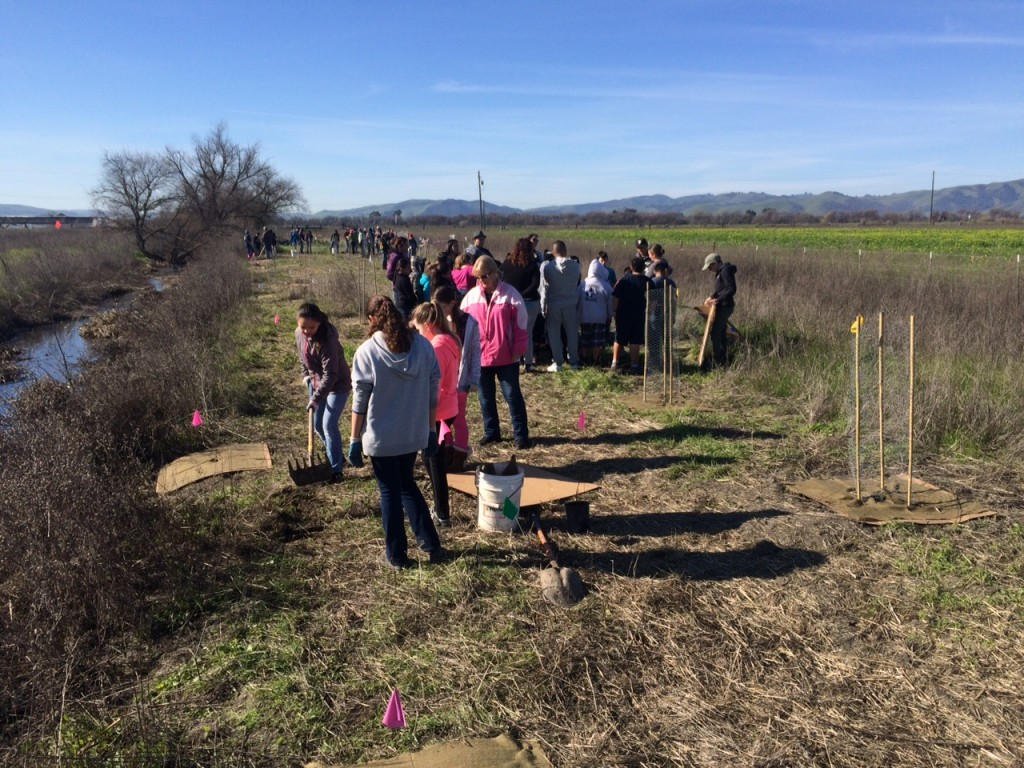 students and teachers restoring a watershed